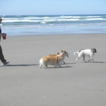 Dogs love our beach!
